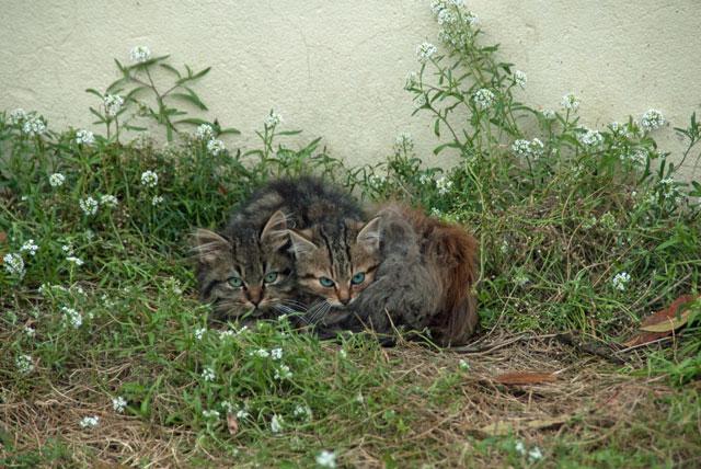 Associations pour chats libres et errants